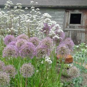 Marchants Hardy Plants