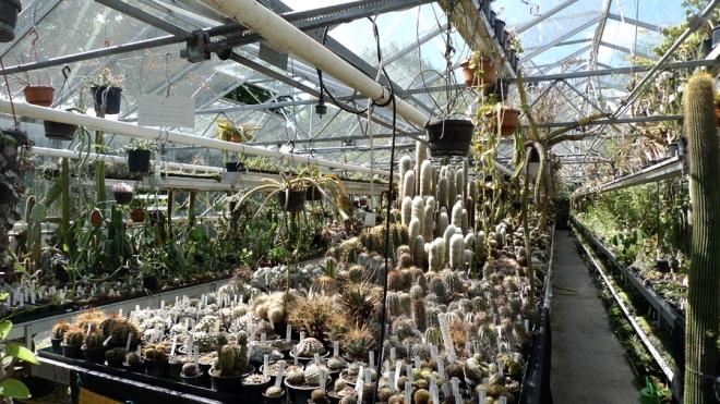 Cactus Kas