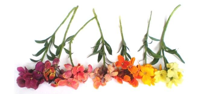 muurbloemen in allerlei kleuren