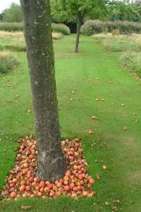 boomgaard jardin plume