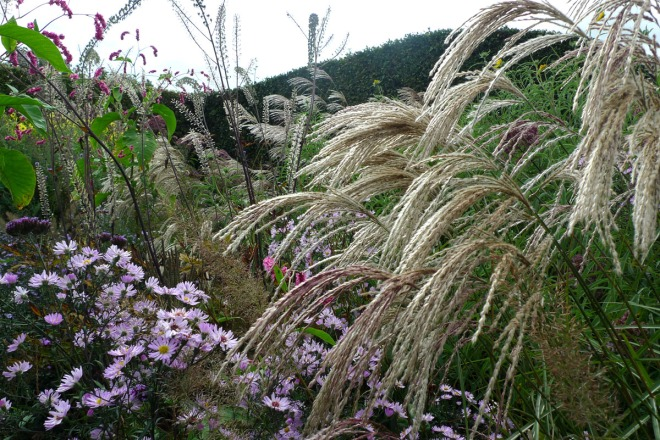 grassen in jardin plume