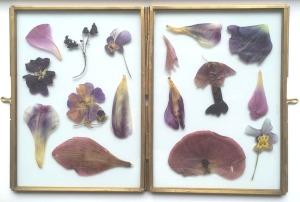 lijstje paars
