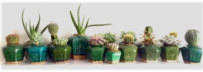 cactussen in gemberpotjes