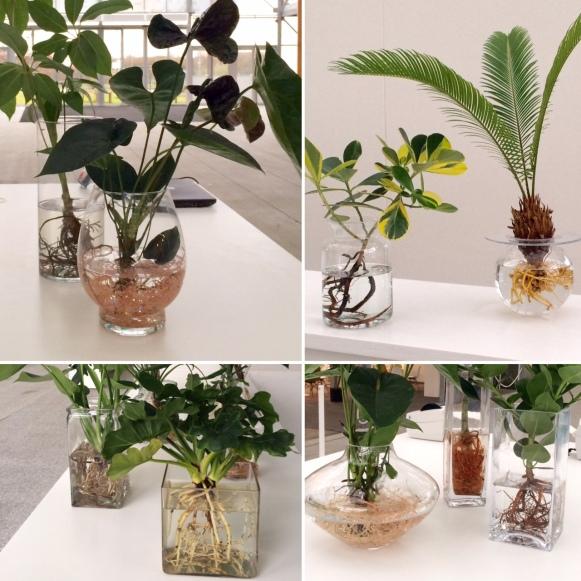 mijn planten op water