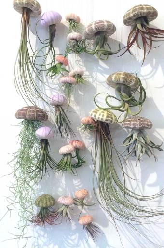 Airplant Jelly fish