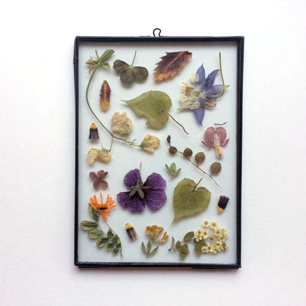 Tuin van Judith Gedroogde bloemen