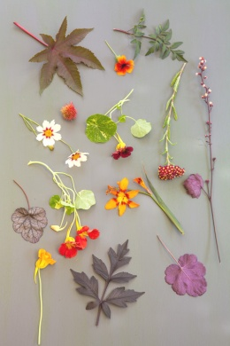 Bloemen rood/oranje border
