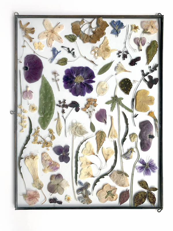 Tuin van Judith, black frame with dried flowers