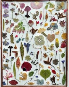 Bloemenlijst Tuin van Judith